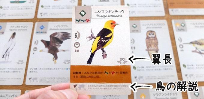 ウイングスパンのカードには、絵が綺麗な鳥が載っている