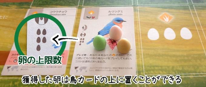 ウイングスパン:獲得した卵は自分が配置した鳥カードの上に置く
